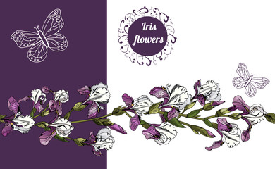 Horizontal composition  with  flowers of iris and endless brush. Hand drawn ink sketch. Colored elements for banner, invitation or greeting card.