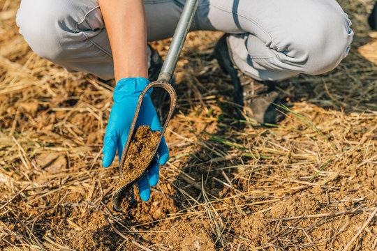 Soil Sampling.  Agronomist Taking Sample with Soil Probe Sampler
