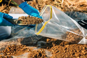 Fototapeta Soil Testing. Agronomy Inspector Taking Soil Sample obraz