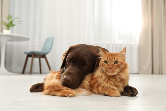 Cat and dog together looking at camera on floor indoors. Fluffy friends