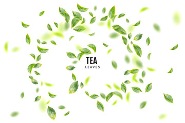 Flying Fresh Green Tea Leaves Vector Background
