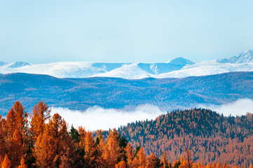 Autumn forest and snow-covered mountains in Altai, Siberia, Russia. Beautiful autumn landscape Fototapete