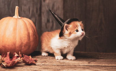 ginger kitten and halloween pumpkin jack-o-lantern on black wood background.