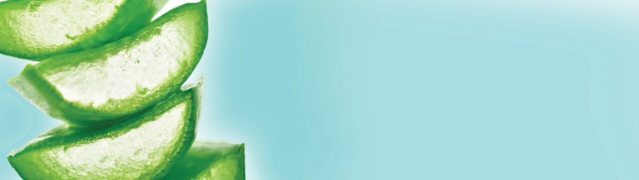 aloe vera banner with text space,