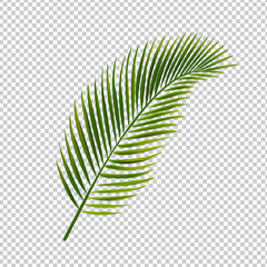 Palm Leaf Isolated Transparent Background