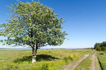 Alone tree by a dirt road in a beautiful landscape with green grass and yellow flowers