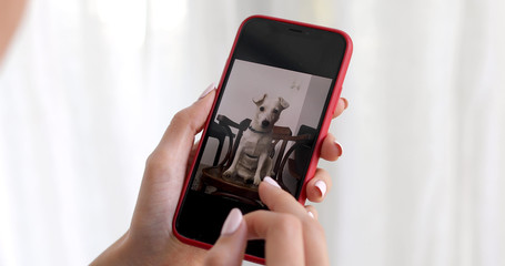 Female hand snaps photos and videos whith dog on a smartphone on a white background curtains