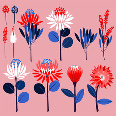 Geometric of protea flowers and botanical plants. Vector ornamental symbols in vector