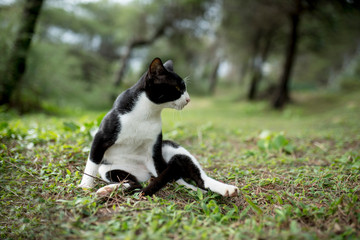 Black white cat sit in garden