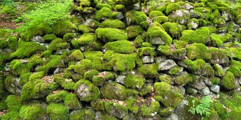 Moosbehangene Steine