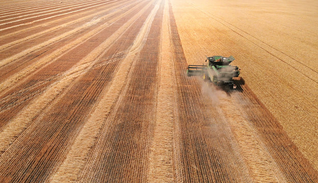 Harvester in a field harvesting wheat. Aerial view from drone.
