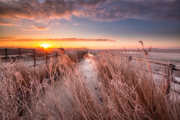 Photo sur Plexiglas Cappuccino A winter landscape in the Netherlands with a beautiful sunrise with bright colours in the sky and frost on the fields - National Park Lauwersmeer, Groningen, The Netherlands