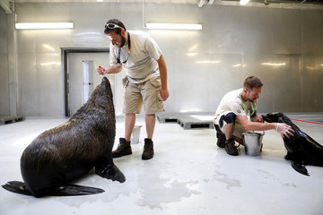 Caretakers feed sea lions Kito,14, and Yassie, 4, with gelatine cubes at the Paris Zoological Park in the Bois de Vincennes