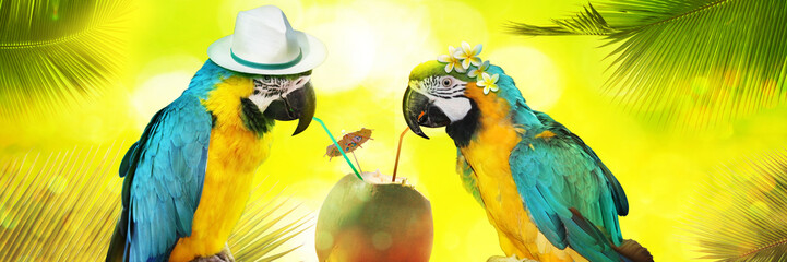 Fotorolgordijn Papegaai Papageien im Urlaub am Strand in den Flitterwochen