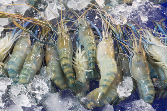 Fresh prawn or river Shrimp on ice at seafood market ,raw for cooking.