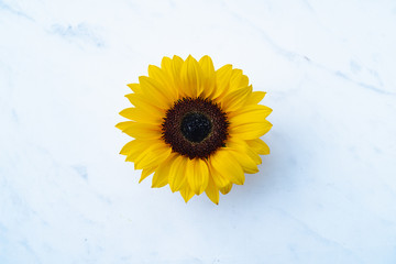 Close up of Sunflower blossom insolated on marble background