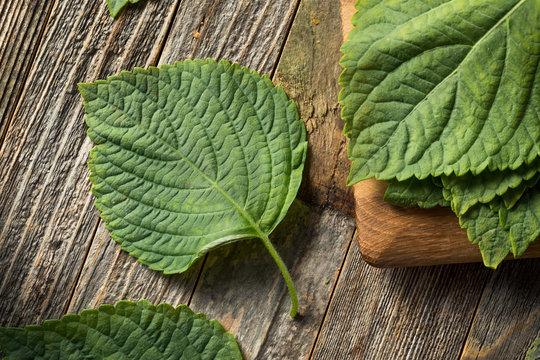 Raw Green Organic Perilla Sesame Leaves