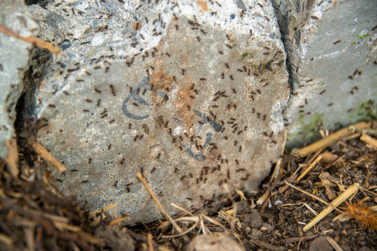 black ants on wood and on stone