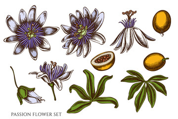 Vector set of hand drawn colored passion flower