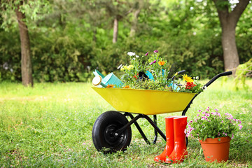 Wheelbarrow with gardening tools and flowers on grass outside. Space for text