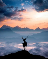 silhouette of man on top of mountain at sunset