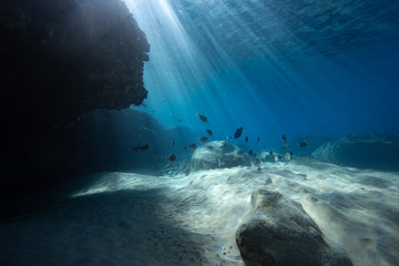 light rays and fish