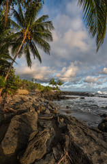 Coastline of Costa Rica with Palm Tree