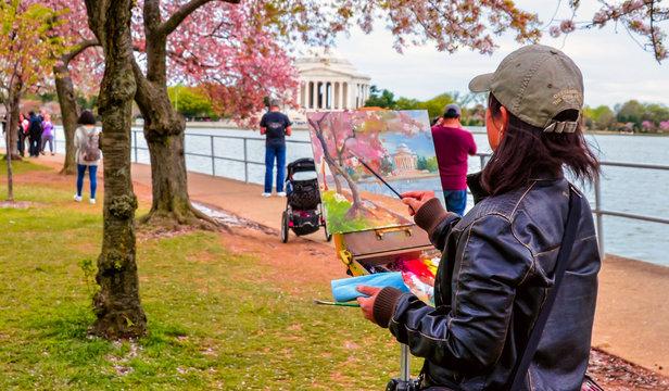 Cherry Blossom and Washington Monument , USA