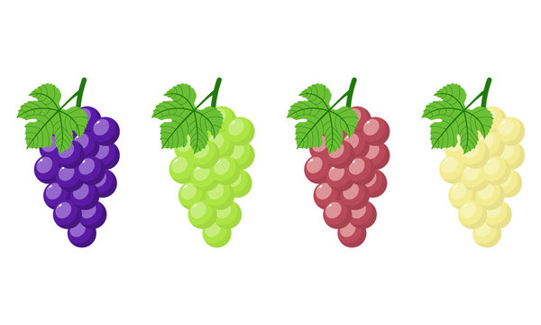 Set of different grapes isolated on white background. Bunch of purple, green, red, white grapes with stem and leaf. Cartoon style. Vector illustration for any design.