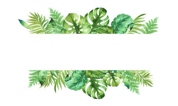 watercolor template of tropical leaves, isolated on white background, hand painted