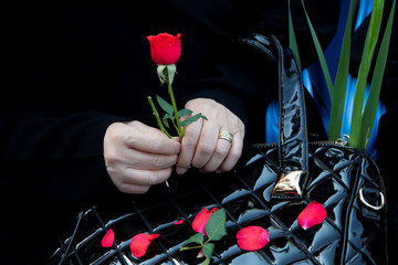 "An Iranian woman holds a red flower as she attends a ceremony to bury remains of 150 ""martyrs"" from 1980-88 Iran-Iraq war in Tehran"