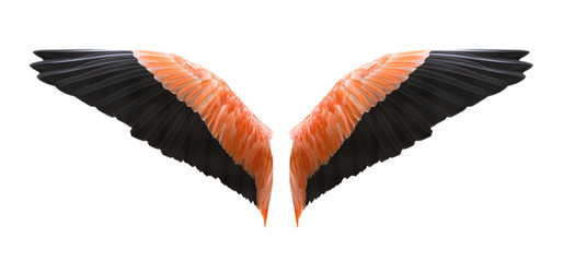 Fototapete - Angel wings isolated on white background with clipping part