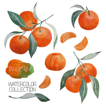 abstract hand drawn watercolor tangerines, branches, leaves and tangerine slices, design elements isolated on white, vector