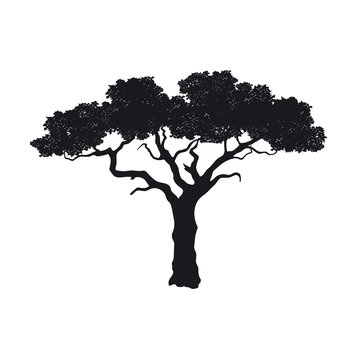 Black silhouette of african tree on white background. Isolated image of savannah nature. Forest landscape of Africa. Acacia icon
