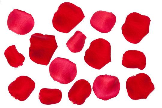 Rote Rosenblätter Freisteller