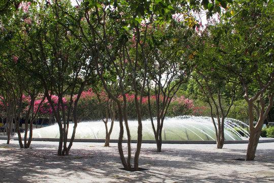 France, Tours, 37, Place Leonard de Vinci, planting shrubs, Gare district