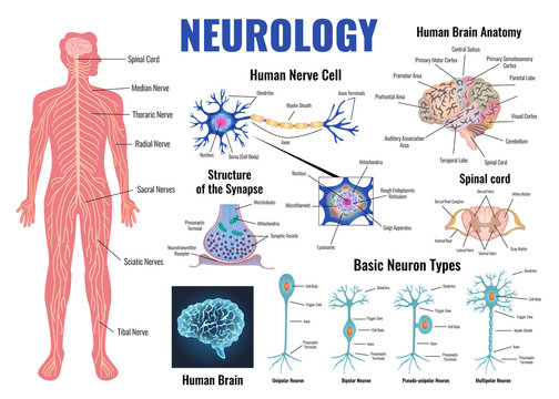 Neurology And Human Brain Set