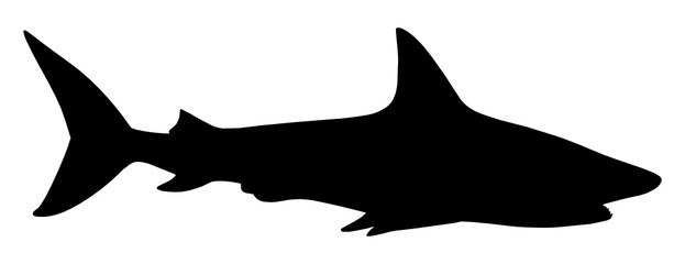 High definition vector illustration of a beautiful shark silhouette isolated on white background. Full editable eps file available.