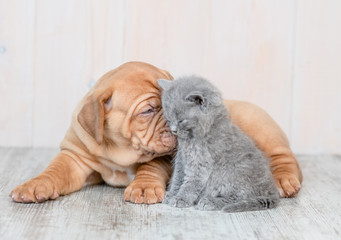 Cute puppy kissing kitten on the floor at home