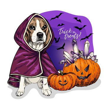 Vector portrait of Beagle dog wearing coat and pumpkins with crystal crown. Halloween illustration.Trick or treats. Hand drawn pet portait. Poster, print, postcard, seasonal greeting.