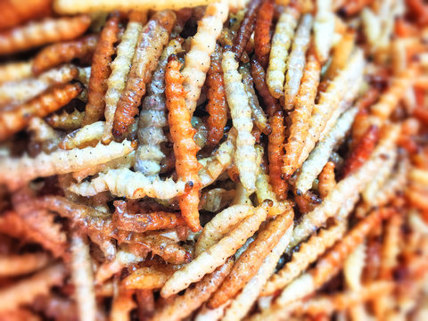 blur Fried or bake bamboo worm, pupae in Bamboo, eating insect culture as snack in Thailand. Background pile of cook bamboo worm