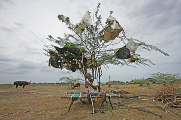 A shepherd takes rest under a tree on a dried-up lake on the outskirts of Chennai