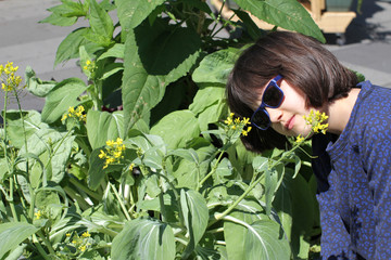 child looking at mustard plant in city garden or street