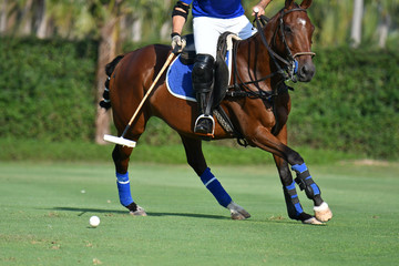 Horse polo player are riding a horse in the polo match.