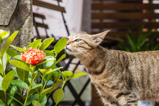 cute wild cat and plant closeup day view