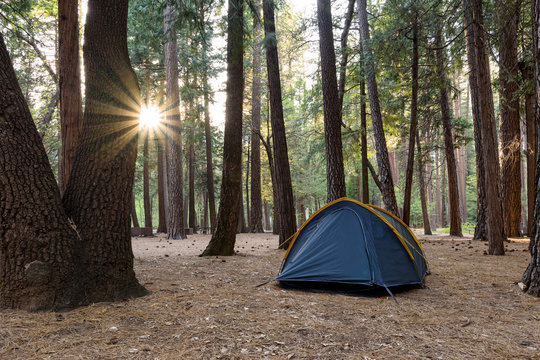 Camping in a pine wood on sunset