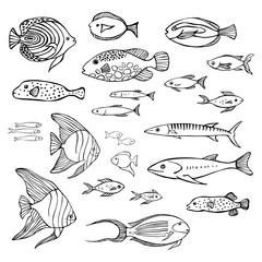 Hand drawn sea fish. Vector sketch  illustration.