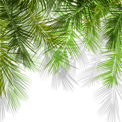 Palm tree branches on white background. Vector illustration.