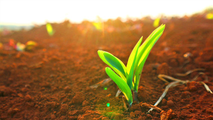 Growing seedlings, morning sunshine background Fototapete