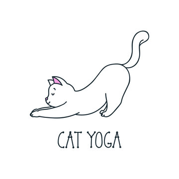 Cat yoga. Illustration of happy white cat in stretching isolated on white background. Vector 8 EPS.